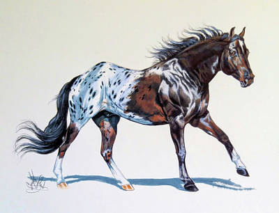 Drawing - Blanketed Appaloosa by Cheryl Poland