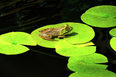 Photograph - Blending In by Greg Fortier