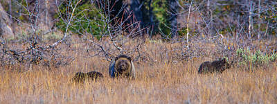 Photograph - Blondie Of Grand Teton National Park by Yeates Photography