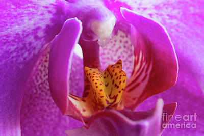 Royalty-Free and Rights-Managed Images - Bloom of orchid by Michal Boubin