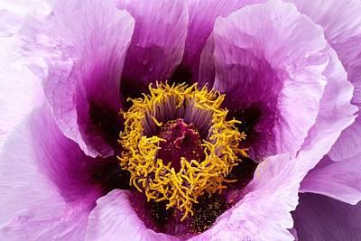 Spring Photograph - Bloom by Ramneek Narang