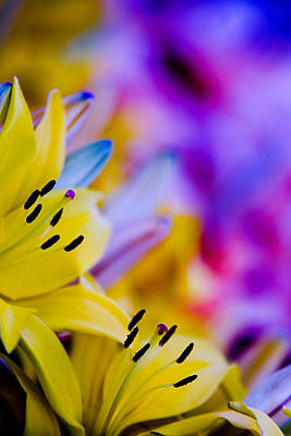 Photograph - Bloom by Ryan Heffron