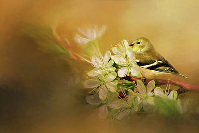Photograph - Blooming Finch by Lana Trussell