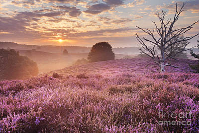 Heather Photograph - Blooming Heather At Sunrise, Posbank, The Netherlands by Sara Winter