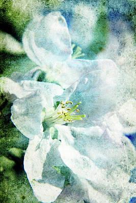 Photograph - Blooming by Lali Kacharava