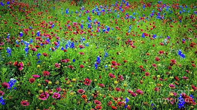 Art Print featuring the photograph Blooming Wildflowers 537 by D Davila
