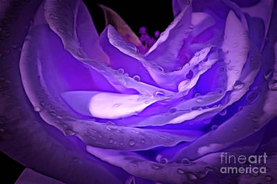 Purple Rose Photograph - Blossom Of Love by Krissy Katsimbras