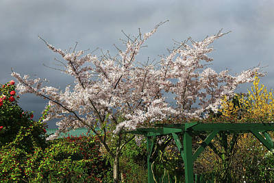 Photograph - Blossom Profusion by Nareeta Martin