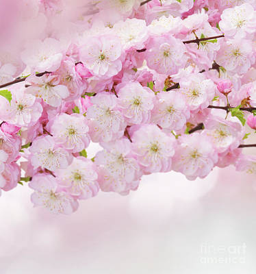 Photograph - Blossoming Pink  by Anastasy Yarmolovich