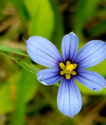 Photograph - Blue Beauty by Vijay Sharon Govender
