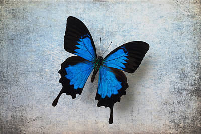 Brown Color Photograph - Blue Butterfly Resting by Garry Gay