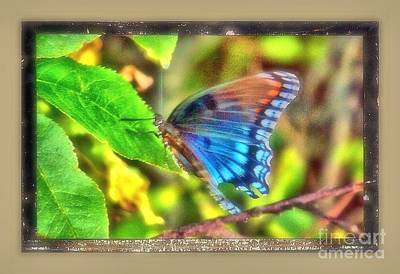 Photograph - Blue Butterfly by Shirley Moravec