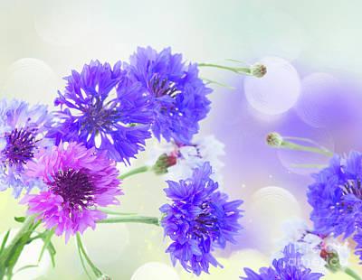 Photograph - Blue Cornflowers by Anastasy Yarmolovich