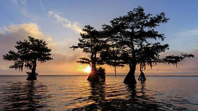 Cypress Photograph - Blue Cypress Lake Morning by Stefan Mazzola