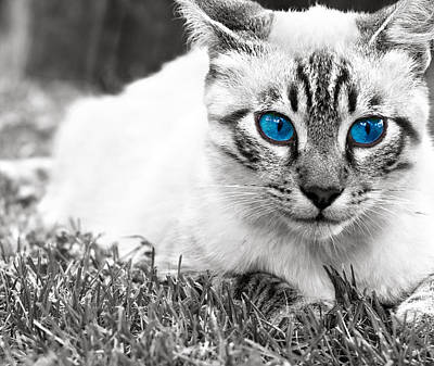 Blue Eyed Cat Art Print by Boyan Dimitrov