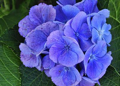 Blue Flower Art Print by JAMART Photography