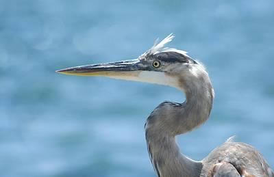 Photograph - Blue Heron Bokeh by Fraida Gutovich