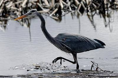 Photograph - Blue Heron by Devon LeBoutillier