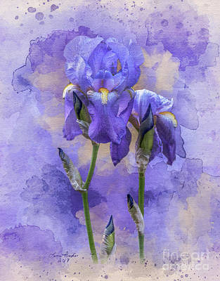 Digital Art - Blue Iris by Lena Auxier