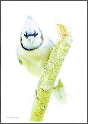 Photograph - Blue Jay On Broken Tree Branch, Animal Portrait by A Gurmankin