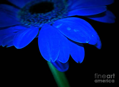 Flowers And Water Drops Wall Art - Photograph - Blue Memories by Krissy Katsimbras