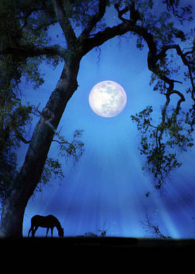 Fantasy Surreal Horse Photograph - Blue Moon Horse And Oak Tree by Stephanie Laird