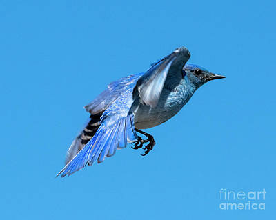 Mountain Royalty-Free and Rights-Managed Images - Blue on Blue by Mike Dawson