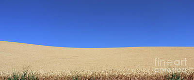 Photograph - Blue Sky And Wheat  3605 by Jack Schultz