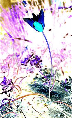 Photograph - Blue Tulip by Diane montana Jansson