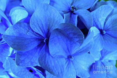 Photograph - Blue by Nancy Patterson