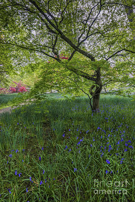Abstract Airplane Art Rights Managed Images - Bluebell Meadow Royalty-Free Image by Ian Mitchell