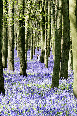 Photograph - Bluebell Woods by Paul Ambridge