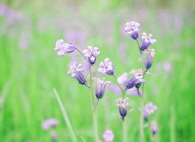Royalty-Free and Rights-Managed Images - Bluebells by Martin Newman