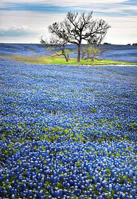 Photograph - Bluebonnet Field by David and Carol Kelly