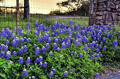 Photograph - Bluebonnets At The Gate by Michael Ziegler