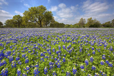 Widflower Photograph - Bluebonnets Of The Texas Hill Country 1 by Rob Greebon