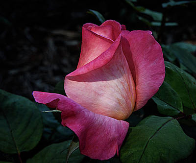 Photograph - Blush by Camille Lopez