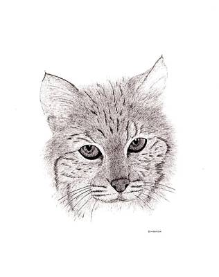 Bobcats Drawing - Bobcat by Ed Einboden