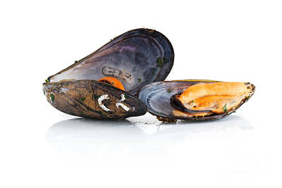 Photograph - Boiled Mussels Isolated Over White Background by Antonio Scarpi