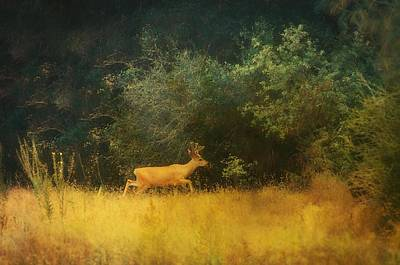 Photograph - Born To Be Wild by Sherri Meyer
