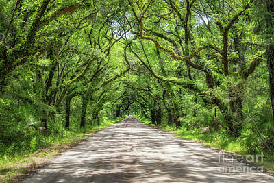 Photograph - Botany Bay Road by Michael Ver Sprill