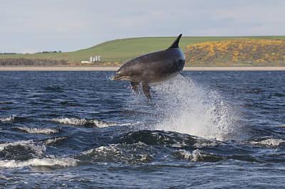 Photograph - Bottlenose Dolphin - Scotland  #14 by Karen Van Der Zijden