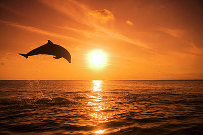Bottlenose Dolphin (tursiops Truncatus) Jumping Out Of Water, Sunset Art Print by Rene Frederick