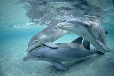 Bottlenose Dolphin Underwater Trio Art Print
