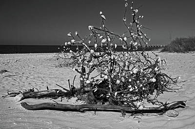 Photograph - Bounty On Gasparilla Island by Michiale Schneider