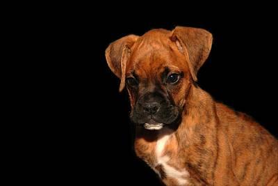 Boxer Puppy Art Print