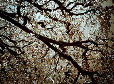 Photograph - Branch One by Lucian Capellaro