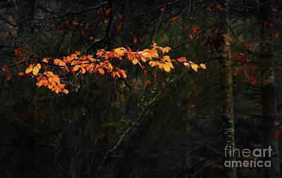 Fantasy Tree Mixed Media - Branch by Svetlana Sewell