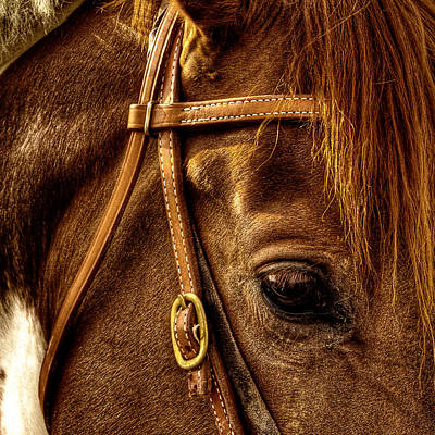 Bridled Art Print by David Patterson
