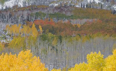 Autumn Leaf Photograph - Brilliant Forest by Leland D Howard